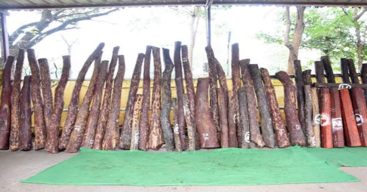 కడపలో రెడ్ స్మగ్లింగ్.. 9 మంది అరెస్ట్